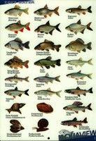 visherkenningskaart-zoet-water.jpg